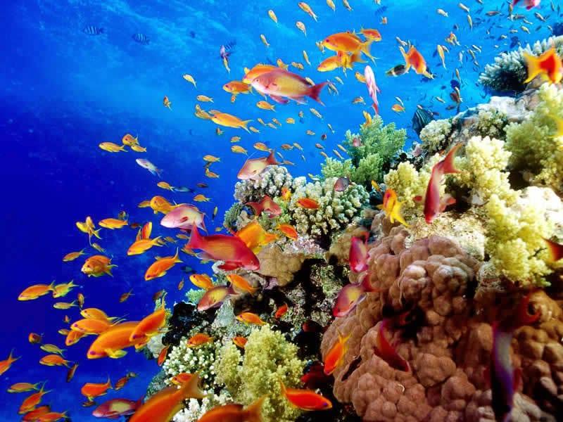 Arrecifes, Riviera Maya Arrecifes 1