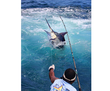 Expediciones de pesca, Ixtapa Zihuatanejo Pesca Deportiva 6