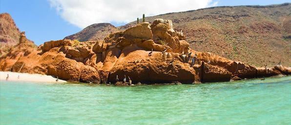 Isla Espíritu Santo, La Paz santo acti3